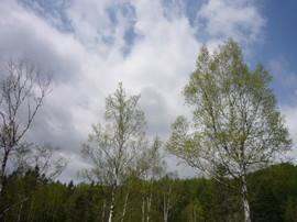 2007526_065_1