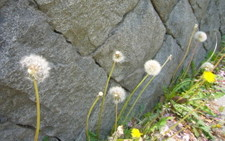 20085_007