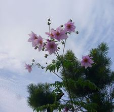 200911_051