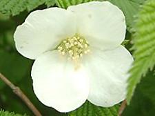 Flower3_131
