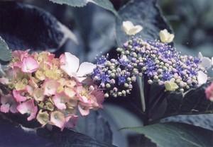 Photo_101