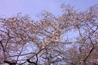 Photo_90